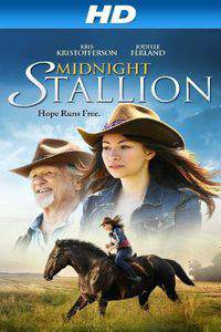 Midnight Stallion