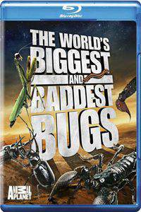 World's Biggest and Baddest Bugs